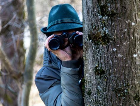 слежка в лесу